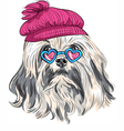 funny cartoon hipster Lowchen dog vector image
