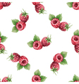 Watercolor pattern of fruit raspberry vector image