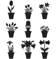 flower pot black vector image