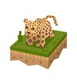 cartoon 3d isometric leopard vector image