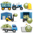 Watermelon Shipping Icons vector image