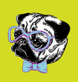 a cute muzzle dog pug dog vector image