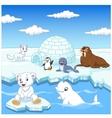 Arctics animals collection set with igloo ice hous vector image