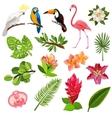 Tropical birds and plants pictograms set vector image