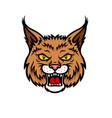 bobcat lynx head muzzle mascot icon vector image vector image