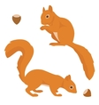 Two squirrels vector image