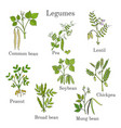 hand drawn set of culinary agricultural legume vector image