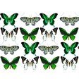Exotic butterflies collection vector image