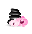 Spa stones with orchid vector image