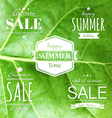 Summer Labels Set vector image