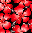 Red tropical hibiscus flowers with black vector image