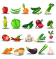set with fresh healty vegetables vector image