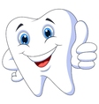 Cute cartoon tooth with thumb up vector image