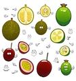 Exotic cartoon feijoa durian and maracuya fruits vector image