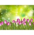 Beautiful tulips EPS 10 vector image