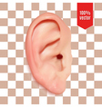 Realistic ear vector image