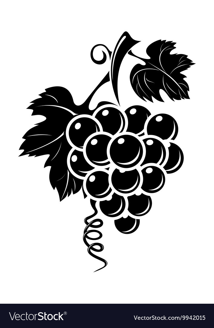 Black grapes icon vector