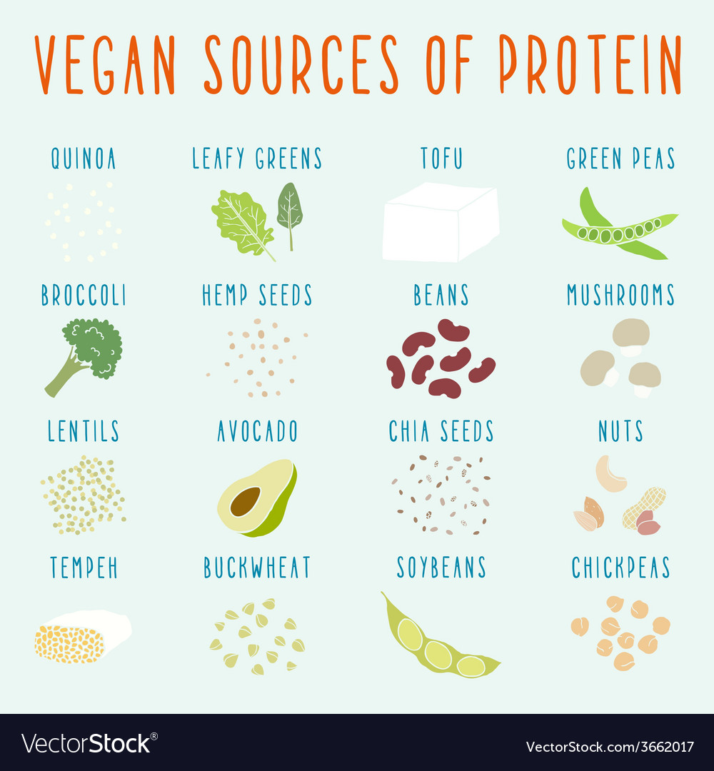 Vegan sources of protein vector