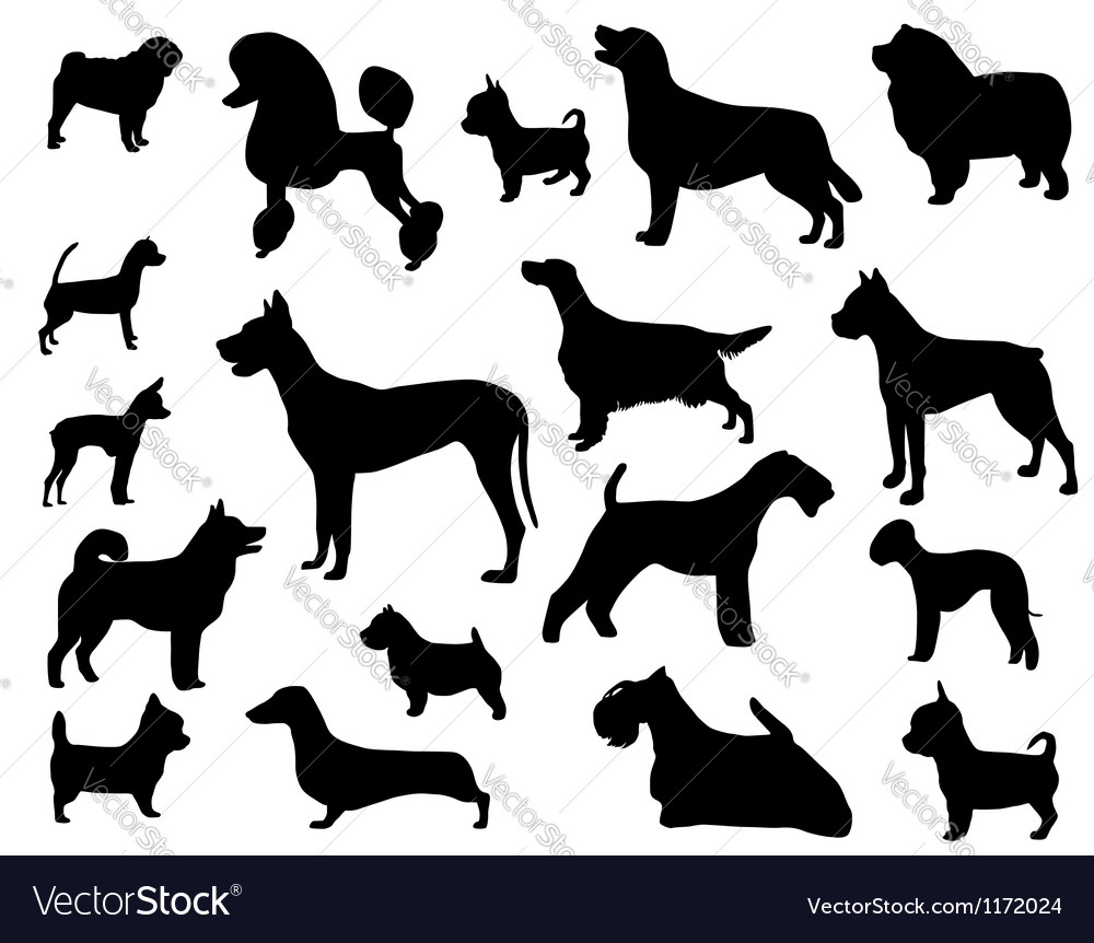 Dog breeds vector