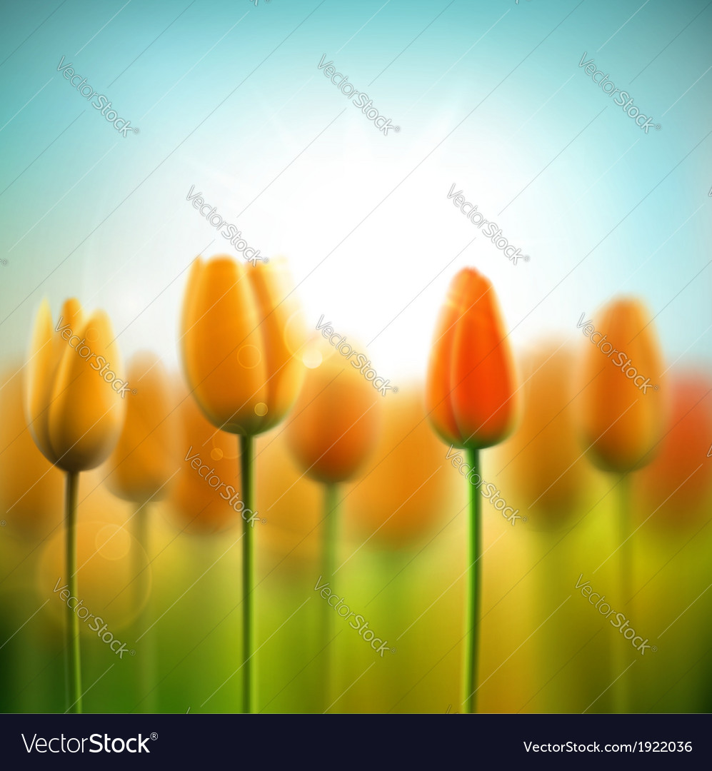 Spring background with tulips vector