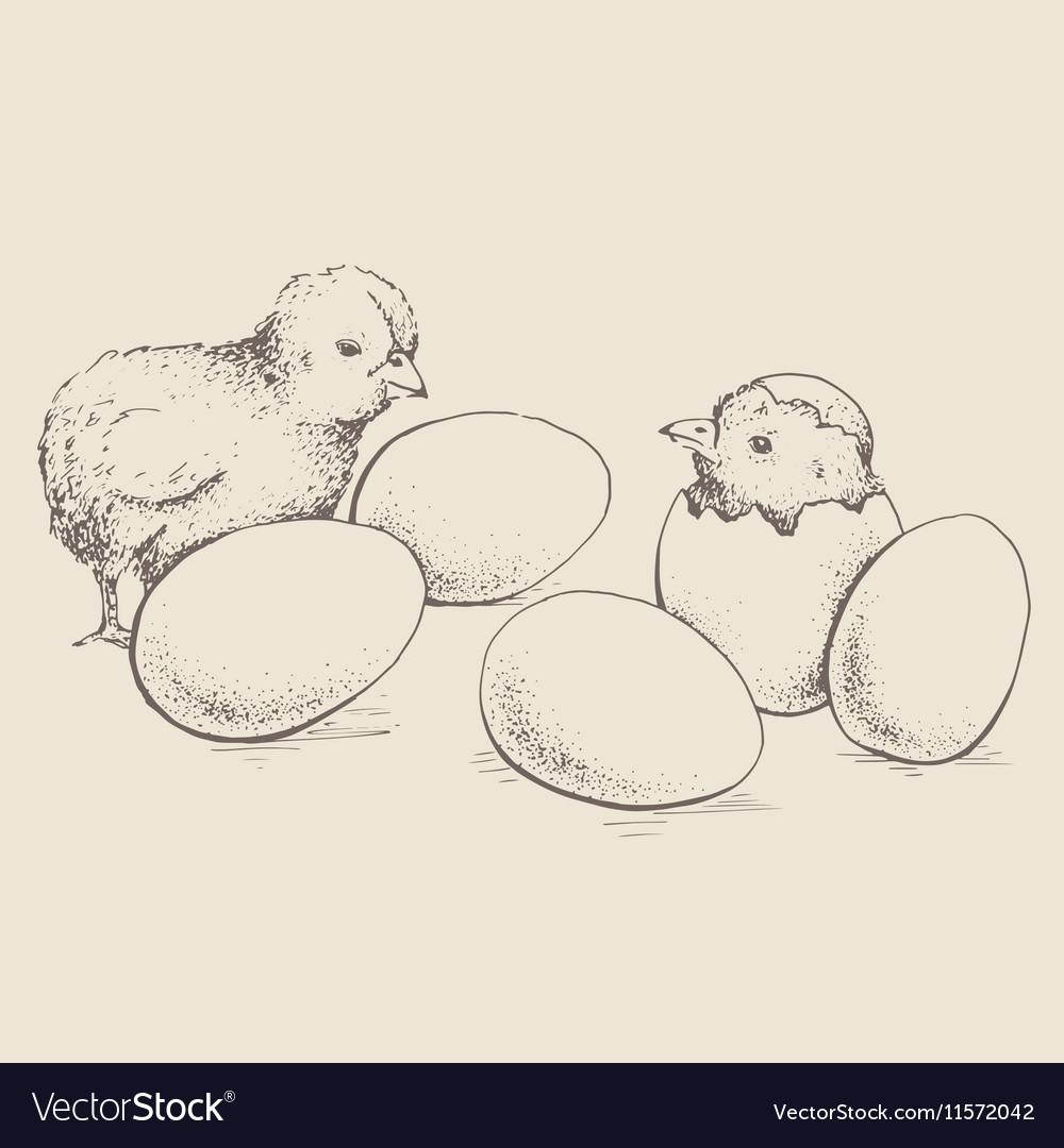 Egg and chicken vector