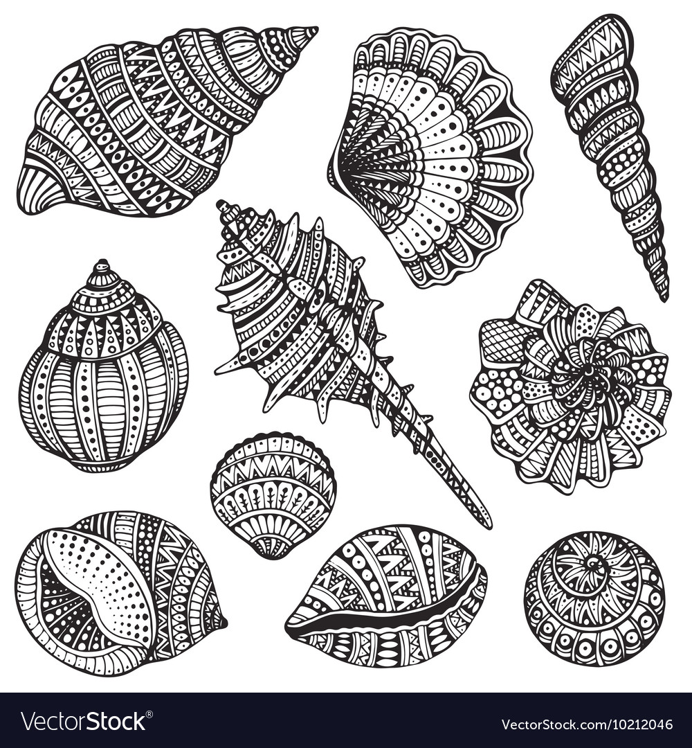 Set of hand drawn ornate seashells vector
