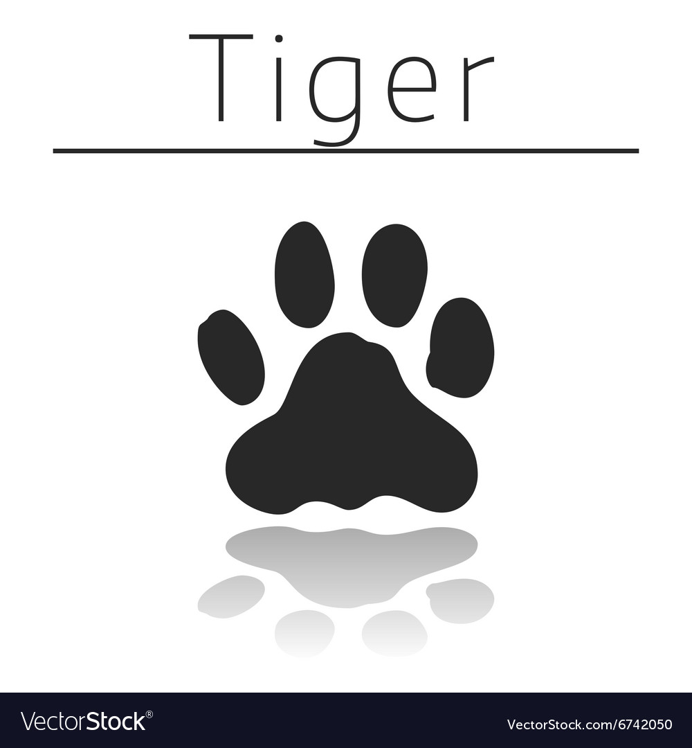 Tiger animal track vector