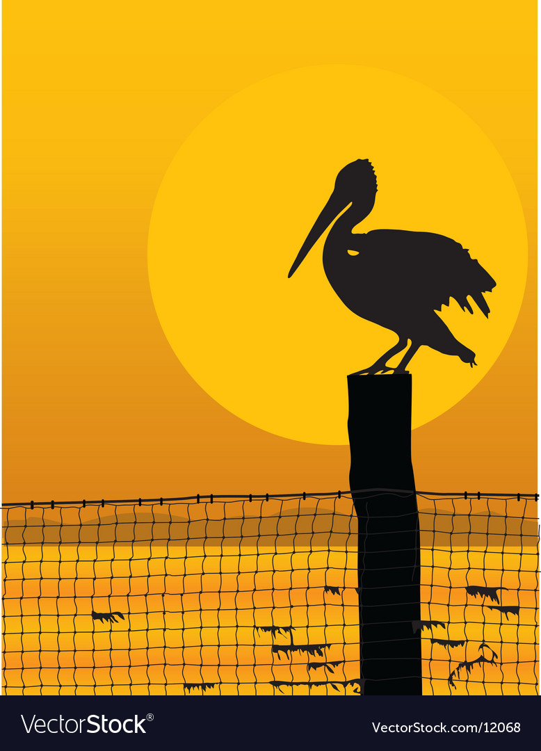 Pelican sunset vector