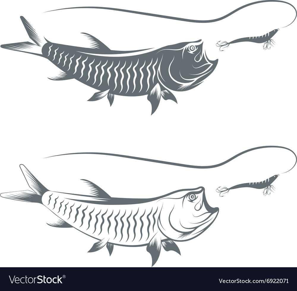 Tarpon fish and lure template vector