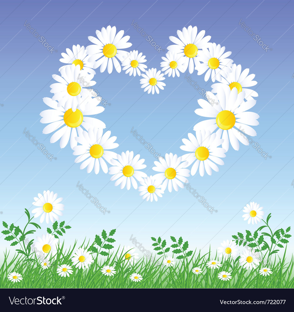 Daisy heart vector