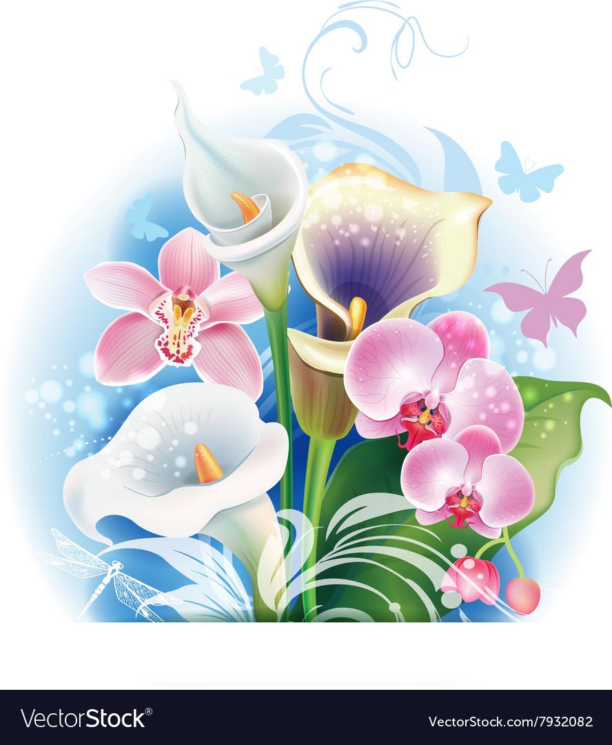 Bouquet of orchid and calla flowers vector