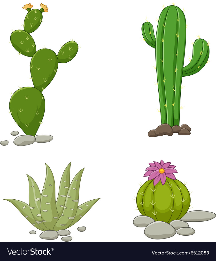 Collection of cactus vector