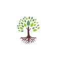 tree root logo vector image