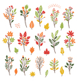 Colorful floral collection with leaves and flowers vector image