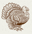 turkey on white background thanksgiving theme vector image