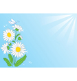summer card with flowers and rays vector image