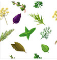 seamless herbs pattern with seasoning and spices vector image