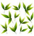 Set of beautiful green leaves vector image