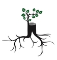 Rejuvenate tree trunk and sprout vector image