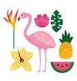 tropical flamengo hibiscus pineapple watermelon vector image