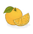 ripe juicy orange still-life from fruit hand vector image