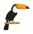 Cartoon toucan isolated birds vector image