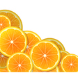 Orange slices vector image