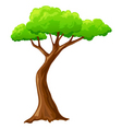 cartoon tree vector image