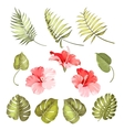 Hibiscus single tropical flower vector image