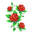 several red roses with leaves vector image