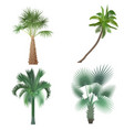 exotic tropical realistic palm tree collection set vector image vector image