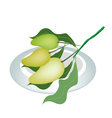 Three Mango Fruits on A White Plate vector image vector image