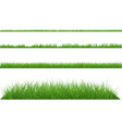 green grass dense big and small vector image