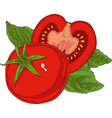 red ripe tomato and green basil vector image